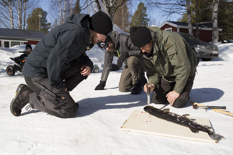 ijsvissen in zweden